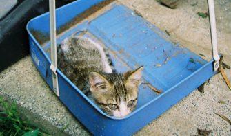 この世界の片隅で、ネコ。EP:21「塵も積もれば縁となる」