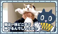 クロロ不思議サイエンス 第二話「猫は一体どこまで伸びるのでしょうか?」