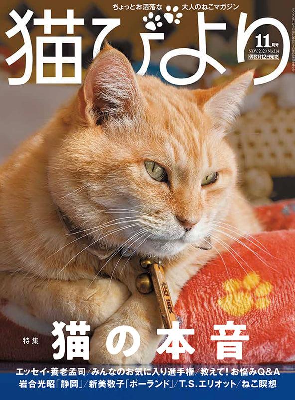 猫びより2020年11月号