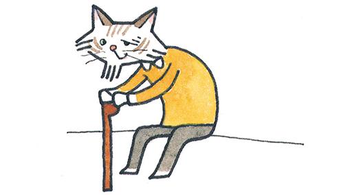 猫の成長・老猫期